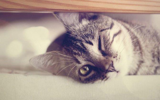 Как кошки проявляют любовь? 10 доказательств того, что ваш кот ОЧЕНЬ любит вас