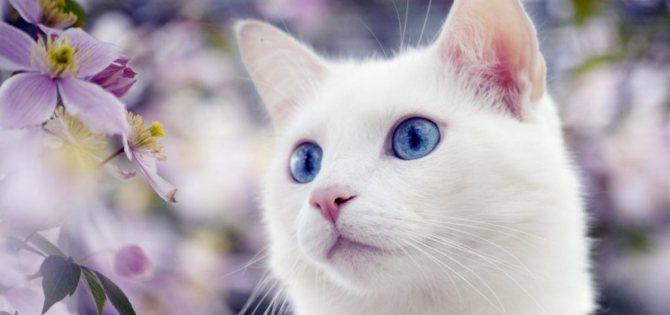 Как кошки ведут себя перед родами и что делать хозяину