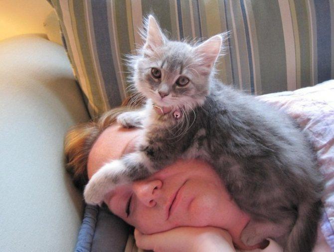 Как коты проявляют любовь к хозяйке