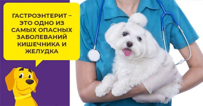 Как лечить гастроэнтерит у щенков и взрослых собак собак