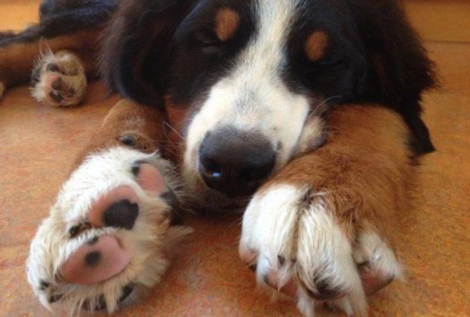 как лечить кисту у собак