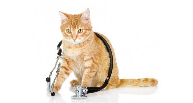 как лечить кошку