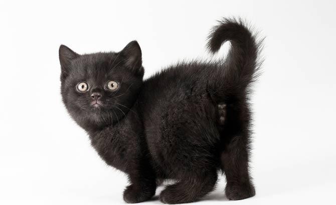 как можно назвать черного котенка