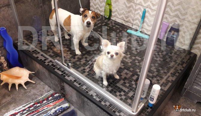 Как мыть собаку полностью