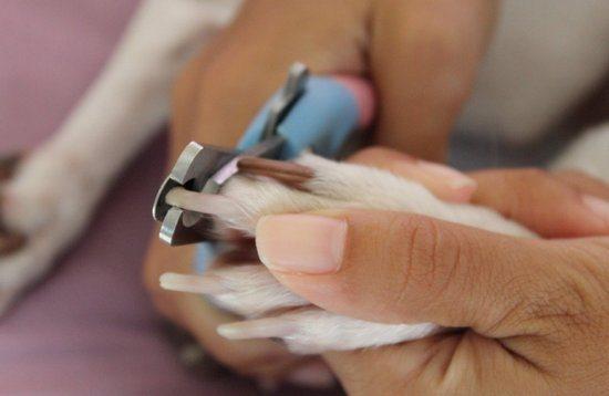 Как мыть собаку шампунем