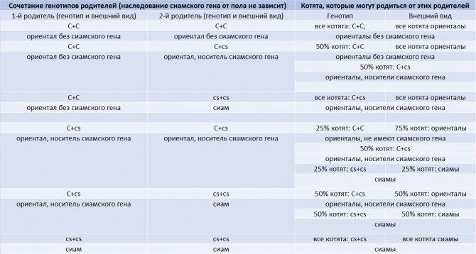 Как наследуется ген ориенталов и сиамов