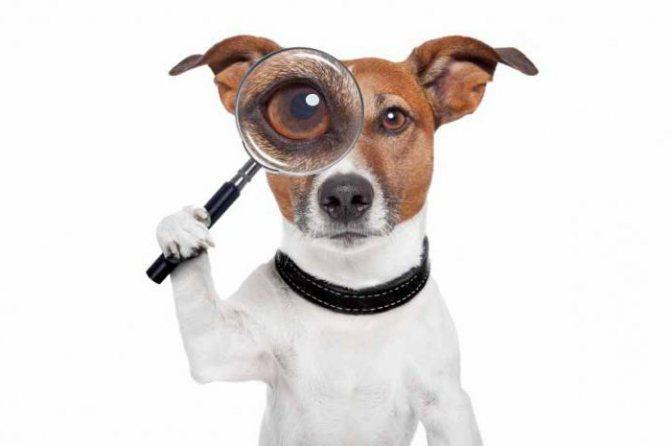 """'Как научить собаку команде """"Рядом""""' height=""""399"""