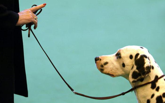 """'Как научить собаку команде """"Рядом"""", инструкция' height=""""375"""