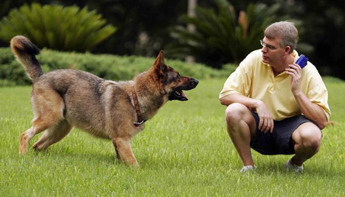 """'Как научить собаку команде """"Рядом"""