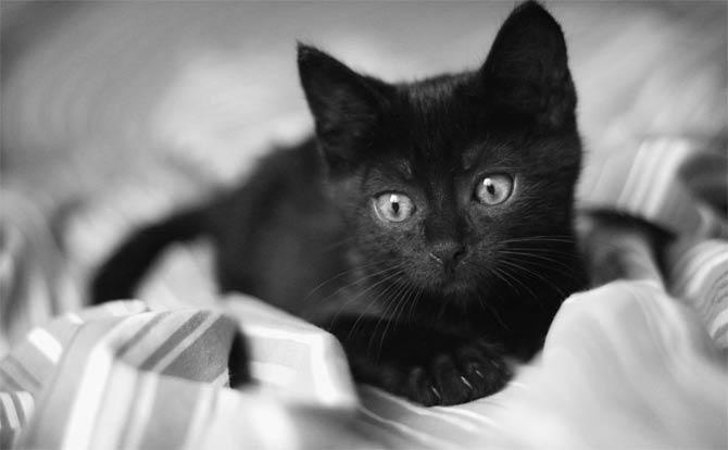 как назвать черных котят