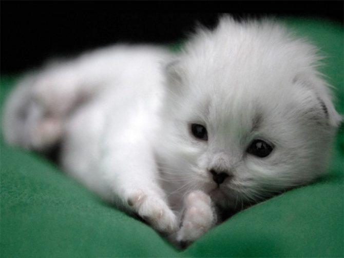 как назвать кота мальчика белого цвета