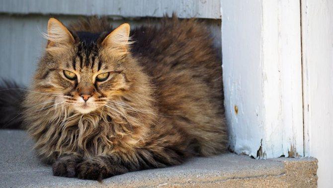 Как не ошибиться выбирая колтунорез для кошек