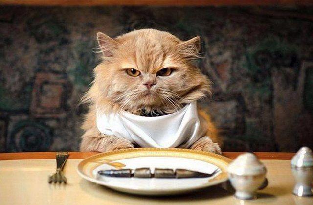 Как не заразиться токсоплазмозом от кошки