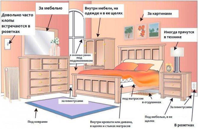 Как обнаружить клопов в квартире