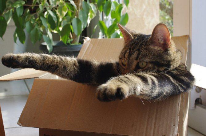 Как объяснить любовь к коробкам у кошек