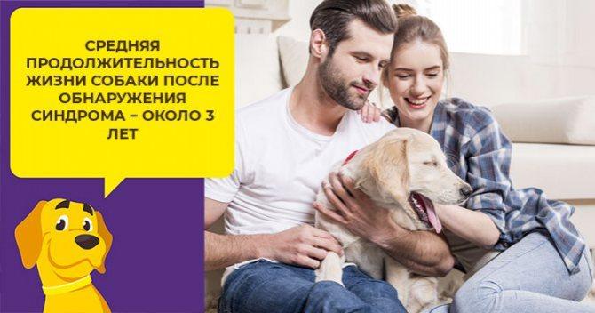 Как определить и лечить синдром Кушинга у собак: виды болезни, первые симптомы, терапия и прогноз для питомца