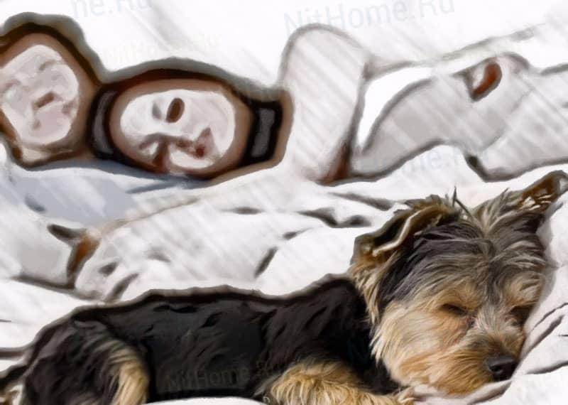 Как определить, кто кусает ночью в постели кроме клопов. Укусы постельных клопов — симптомы и лечение Кто то кусается в кровати по ночам