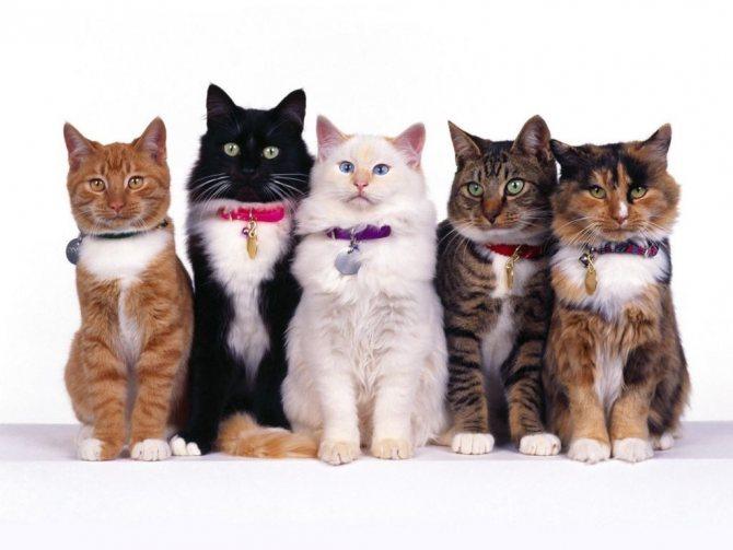 Как определить правильный возраст для кастрации кота