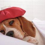 Как определяется мочекаменная болезнь у собак