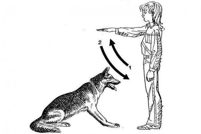 Как отдавать собаке команды