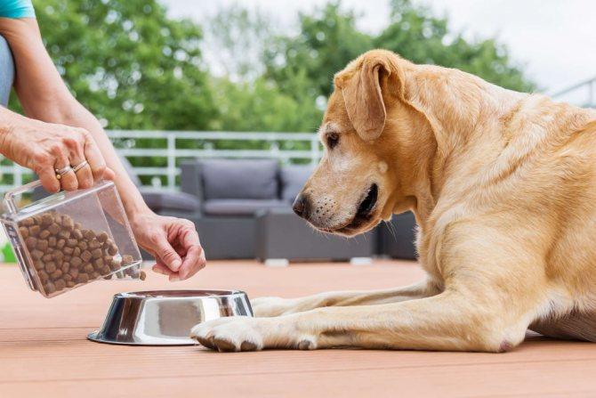 Как отмерить вес корма для собаки