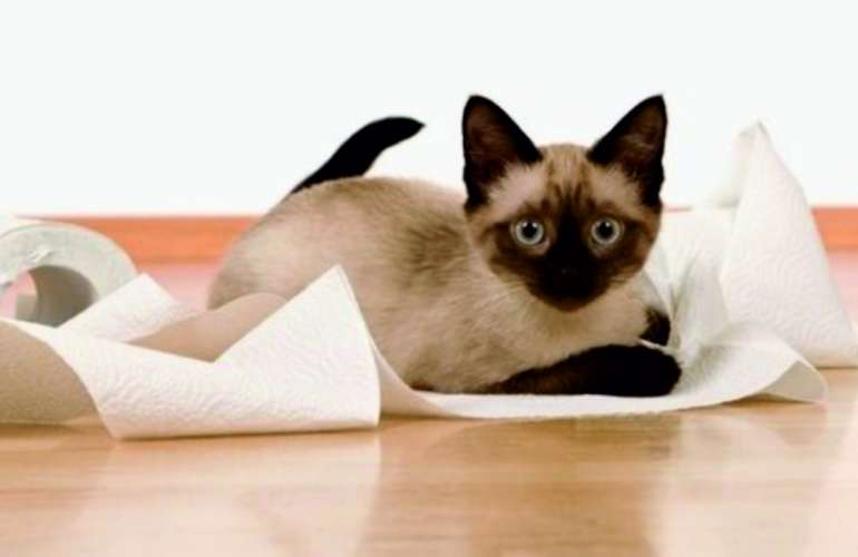 Как отучить гадить в неположенном месте кота и кошку
