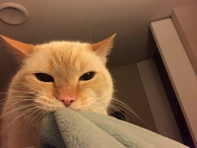 Как отучить кошку будить утром