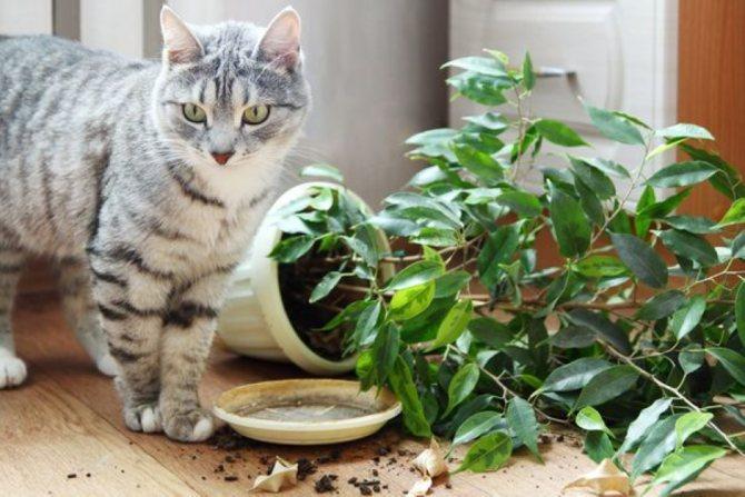 Как отучить кошку гадить в цветочные горшки