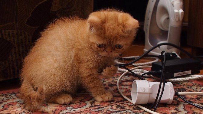 Как отучить кошку грызть провода в доме