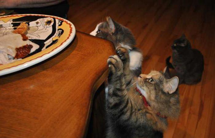 как отучить кошку лазить по столам и есть еду
