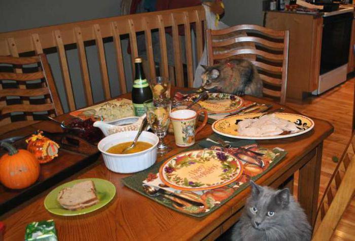как отучить кошку лазить по столам с помощью тока