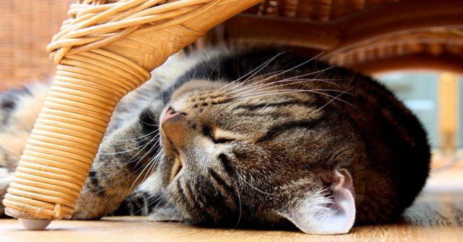 Как отучить кошку спать на кровати?