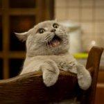 Как отучить кота орать. Эффективные методы читайте статью