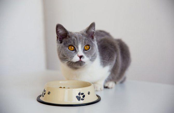 Как отучить кота от сухого корма правила перехода на другое питание