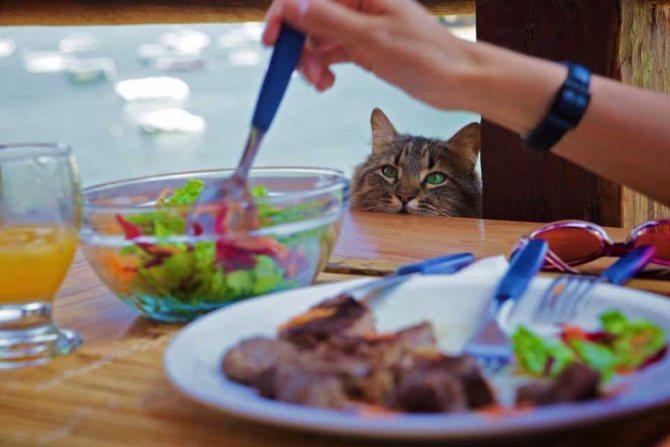 Как отучить кота воровать со стола
