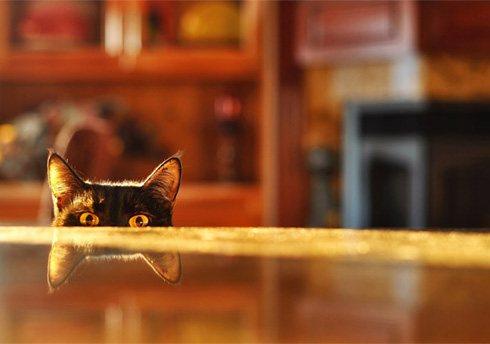 Как отучить кота запрыгивать на стол?