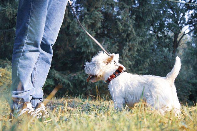 Как отучить собаку подбирать еду на улице?