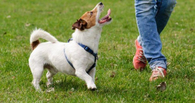 как отучить собаку подбирать