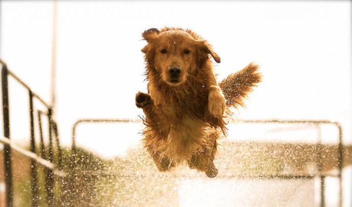 как отучить собаку прыгать на хозяина от радости