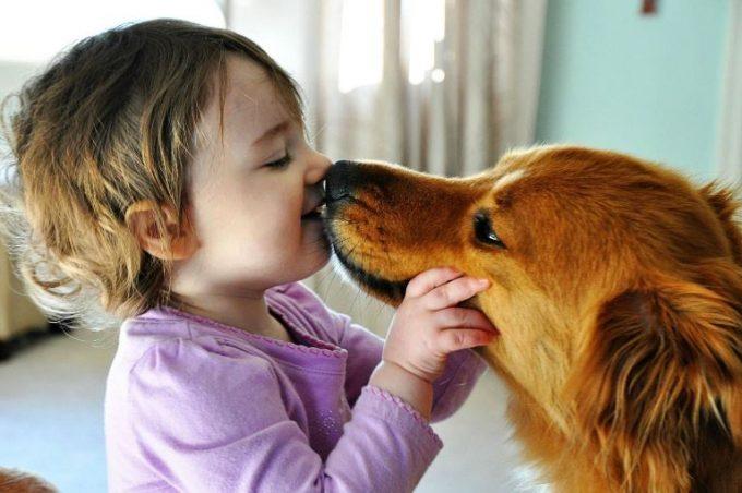 как передаются заразные болезни собак человеку
