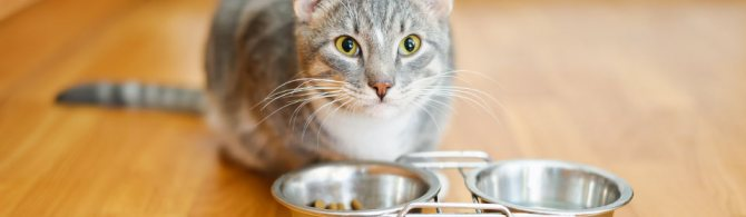 Как перевести кошку на другой корм?