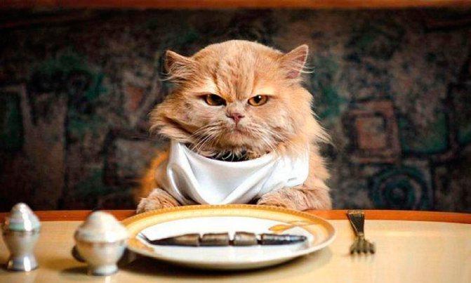 Как перевести кота на домашнюю еду