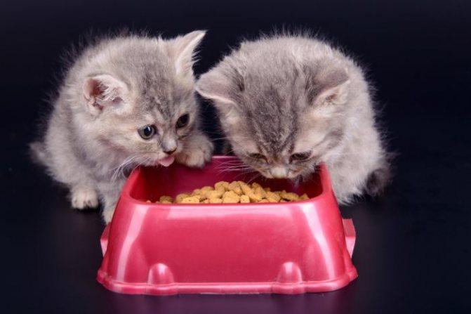 Как перевести кота с натуральной еды на сухие корма