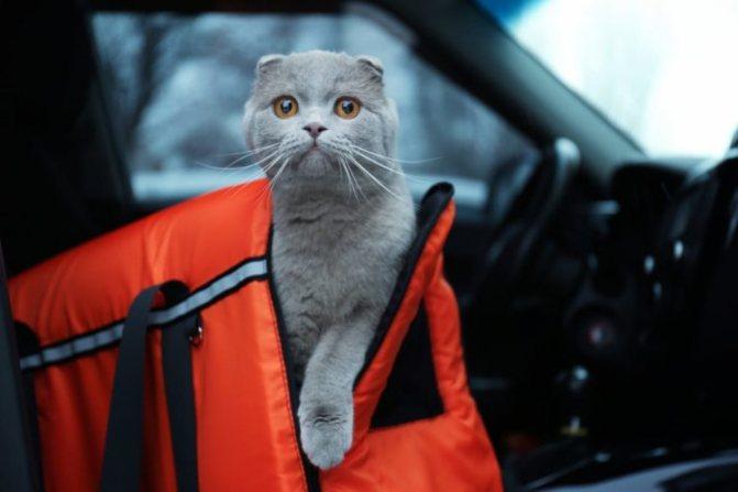 как перевезти кошку с комфортом