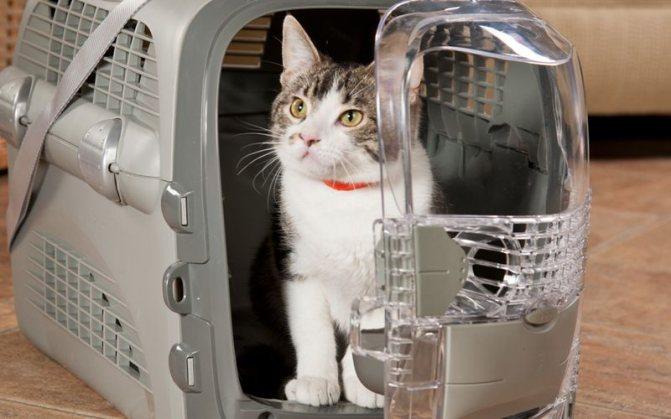 Как перевозить в самолете кошку