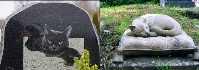 Как пережить смерть кота?