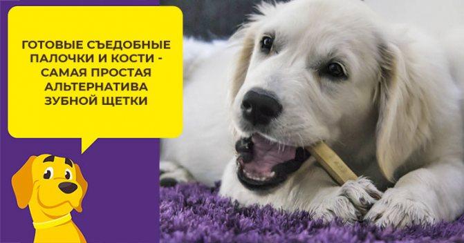Как почистить зубы собаке, чтобы никто не пострадал