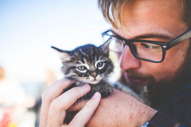 Как помочь котенку сходить в туалет