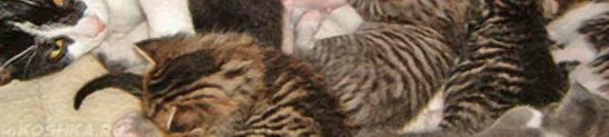 Как понять, что кошка родила всех котят? - Nalatty