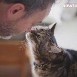 Как понять, что кошка тебя любит - ZdavNews